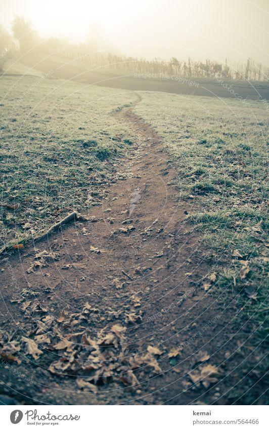 Einer der Wege Umwelt Natur Landschaft Pflanze Winter Eis Frost Baum Gras Blatt Grünpflanze Wiese Wege & Pfade hell kalt Morgen Wein Morgendämmerung Einsamkeit