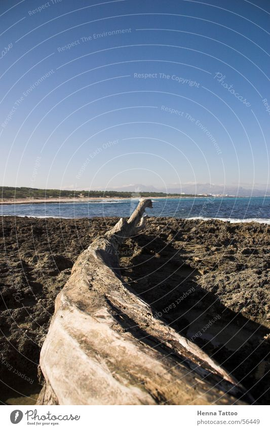 Serpiente de Árbol Himmel Meer Strand Küste Treibholz