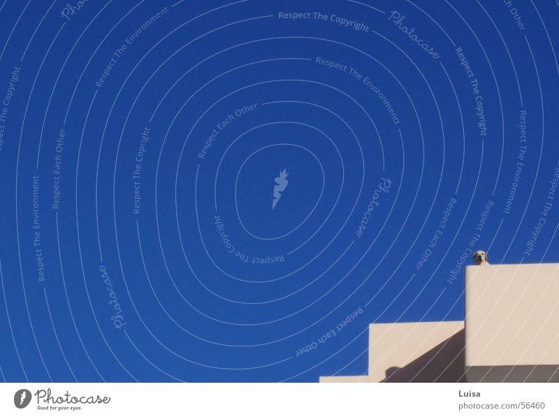 Hund auf Ibiza Himmel Sonne blau Sommer Wärme Aussicht Physik beobachten Kontrolle Schönes Wetter überblicken