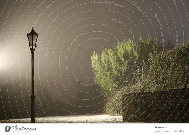 Sherlock Holmes Baum Sträucher Nacht Langzeitbelichtung dunkel Laterne Stimmung Nebel Kriminalroman Regen Traurigkeit