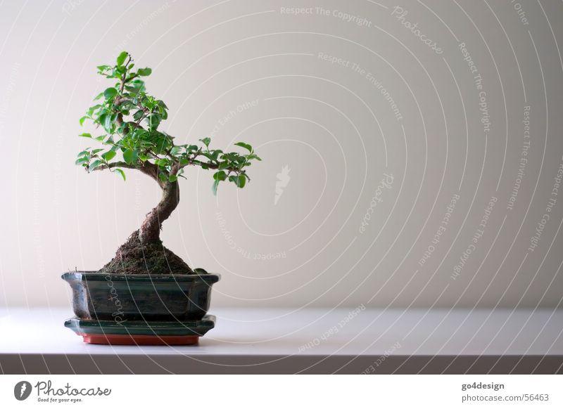 Bonsai Natur schön Baum klein Asien Buddhismus Japan Wurzel Tokyo sehr wenige Zen puristisch Feng Shui Japanischer Garten