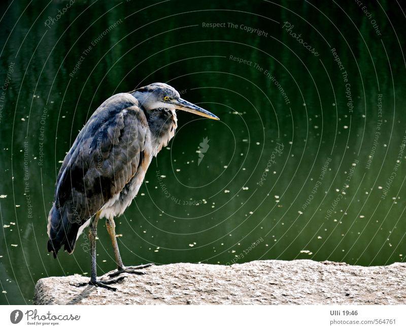 Mir is langweilich................................. Natur schön grün Wasser Erholung Tier Herbst grau Stein Vogel stehen authentisch Schönes Wetter beobachten