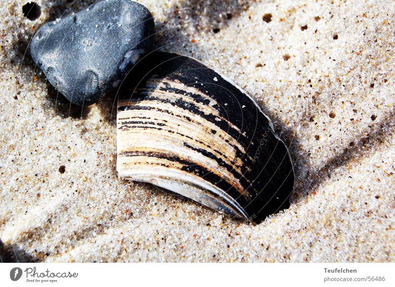 Strandmuschel Muschel Kies Meer Ebbe Winter Sand Stein Erde Wasser Nordsee Dänemark Flut Sonne