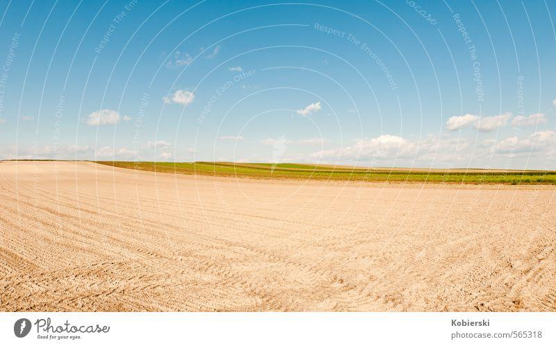 nach der Ernte Lebensmittel Getreide Landwirtschaft Erde Sand Himmel Wolken Herbst Feld Feldarbeit Essen natürlich blau braun gelb Business Einsamkeit Identität