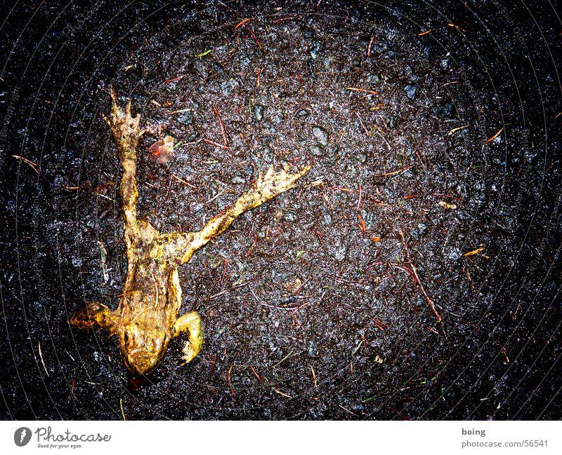 Warum soll man nach 5 nicht in den Urwald gehen? Froschlurche Unfall platt Umweltschutz Flucht wandern Krötenwanderung Oberschenkel Tierfreund Nacht Sicherheit