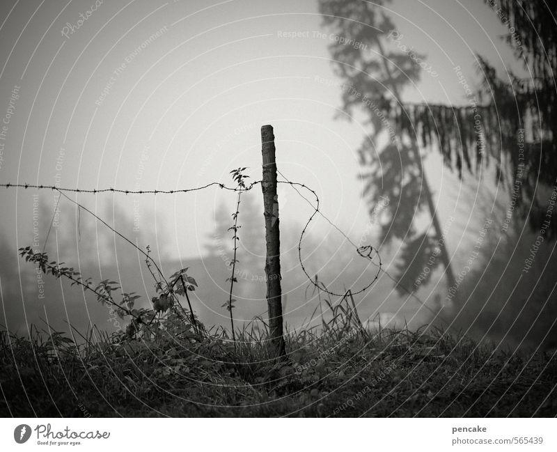 im umbruch Natur Baum Landschaft Haus Wald Umwelt Senior Herbst Gras Feld Nebel Sträucher Urelemente Vergänglichkeit Wandel & Veränderung Neigung