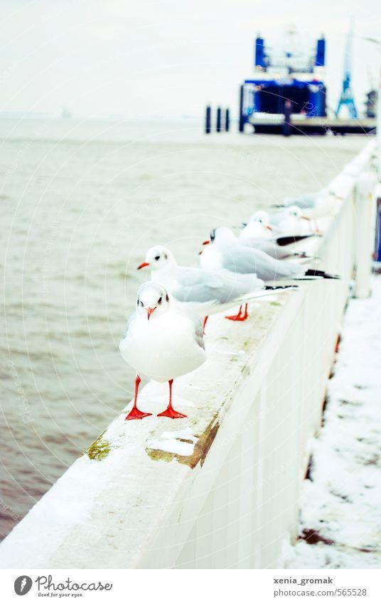Möwe Umwelt Natur Tier Wasser Winter Klima Schönes Wetter Wind Eis Frost Schnee Küste Seeufer Strand Nordsee Ostsee Meer Bach Fischerdorf Hafenstadt