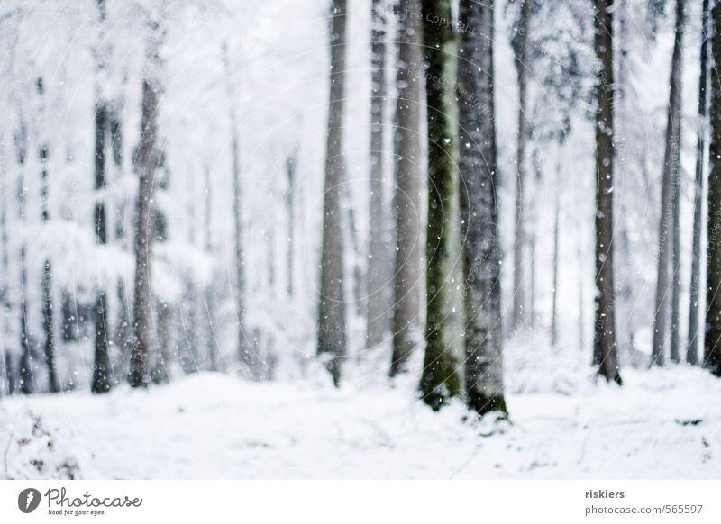 so muss winter ii Natur weiß Pflanze Baum ruhig Winter Wald kalt Umwelt Schnee Stimmung Schneefall Wetter Schönes Wetter frisch
