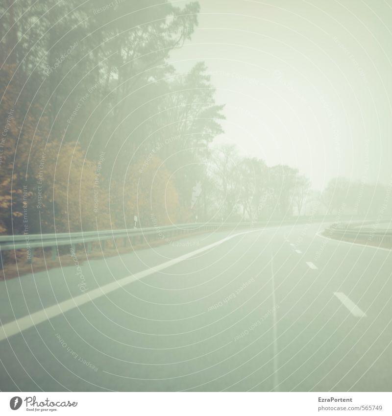 | - - - Himmel Natur Pflanze Baum Landschaft Wolken Umwelt Straße Herbst Bewegung Wege & Pfade grau Linie Nebel Verkehr Schilder & Markierungen