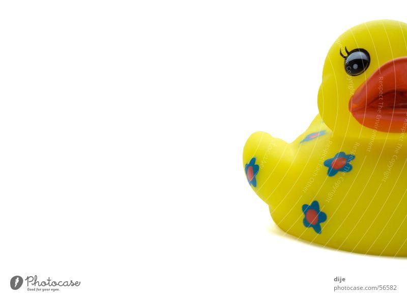 wollen wir baden gehen???? weiß blau Freude Blume Auge Tier gelb Spielen lustig Schwimmen & Baden Geschenk Wellness Kunststoff Spielzeug Badewanne