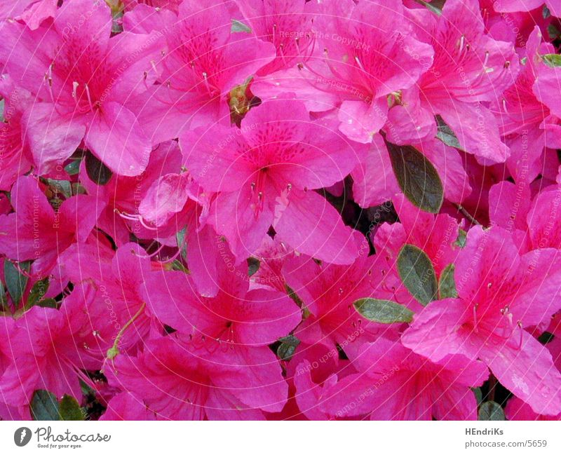 Blümli Blume Pflanze Natur
