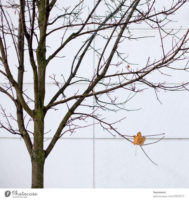 200 | einsam. Stadt schön weiß Pflanze Baum Einsamkeit ruhig Blatt Winter gelb Wand Herbst Mauer Holz oben Linie