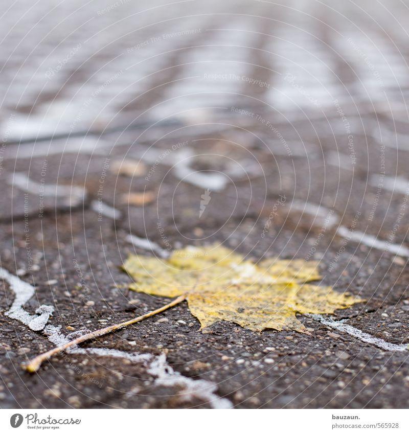 festgefahren. Natur Stadt Pflanze Einsamkeit Blatt Winter gelb kalt Straße Wege & Pfade grau Stein Garten liegen Eis Park