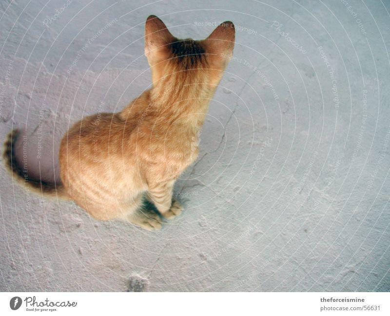 Blonde Katze hell blond Beton Fell Haustier Pfote Schwanz scheckig Tierfuß