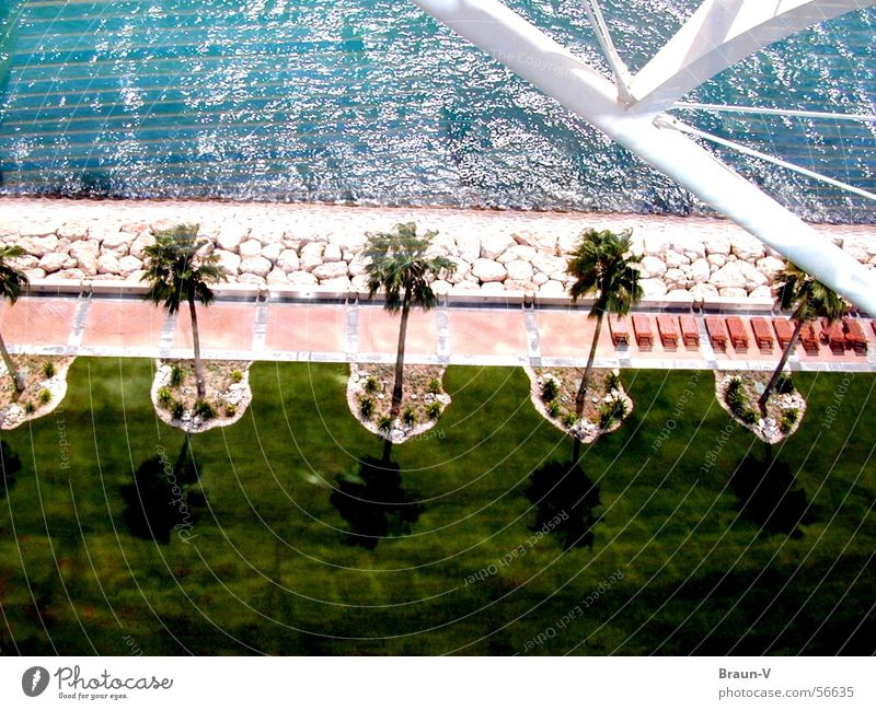 4 1/2 Palmen ;) Wasser weiß Baum Sonne Meer grün blau Pflanze Strand Ferien & Urlaub & Reisen Wiese Gras Garten Stein Wege & Pfade Sand