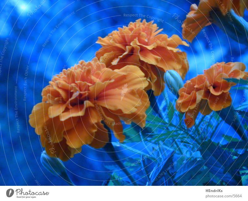 Blümchen Natur Blume Pflanze