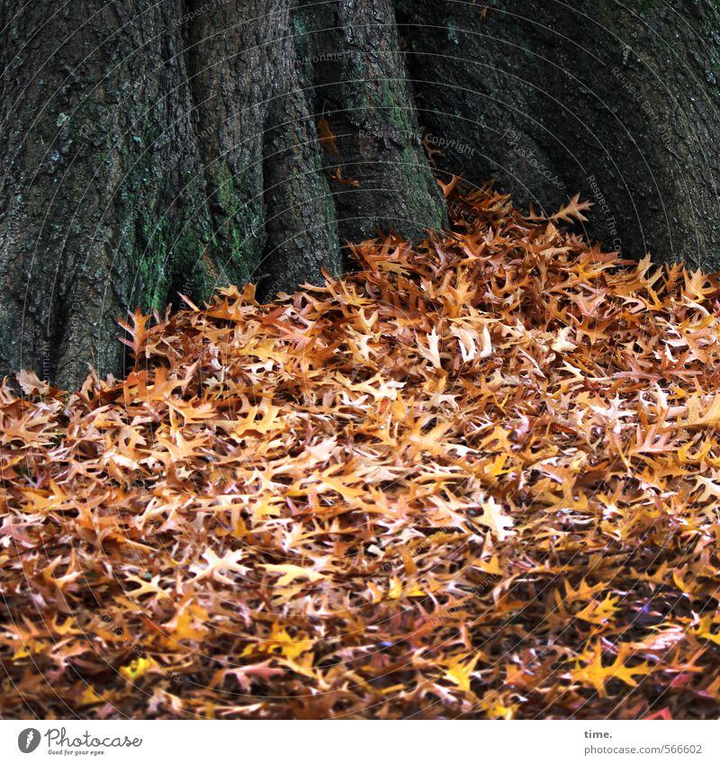 Herbstauflauf Umwelt Natur Landschaft Pflanze Blatt Baum Baumstamm Herbstlaub Park liegen friedlich Gelassenheit ruhig Wahrheit Weisheit Müdigkeit ästhetisch