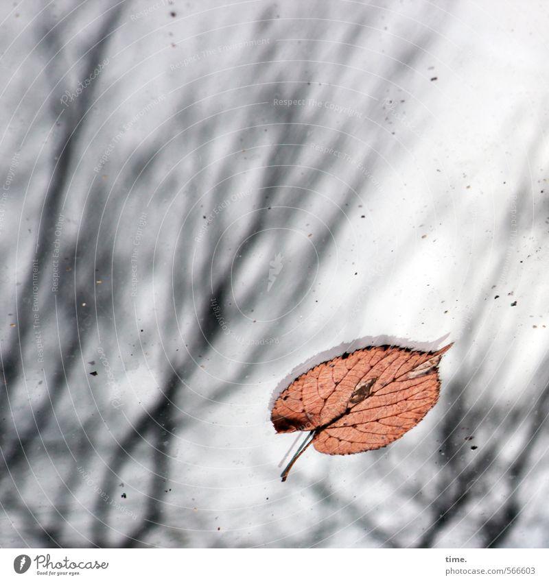 ghost in the urban woods Umwelt Herbst Blatt Buche Buchenblatt Ast Zweige u. Äste Verkehr Autofahren PKW Motorhaube liegen einzigartig ästhetisch Gefühle