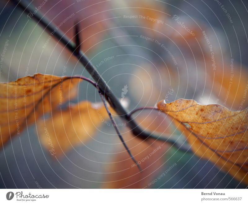 Zweigstelle Herbst Blatt Zweige u. Äste Blattknospe bunt. schwarz braun orange Unschärfe Nahaufnahme blau Blattadern Natur Pflanze Wald Spaziergang Erholung