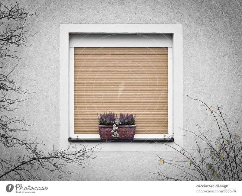 Trautes Heim Umwelt Herbst Sträucher Fenster Rollladen Blumenkasten einfach Kitsch trist Stadt grau orange Sicherheit Schutz Geborgenheit ruhig Einsamkeit
