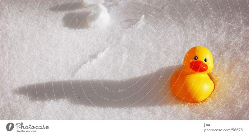 Entlein klein... Badeente gelb rot weiß spät deplatziert Ente Schnee Schatten langer schatten im schnee Sonne