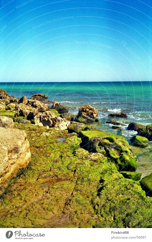 Das Meer zieht sich zurück Meer grün Stein Farbenspiel