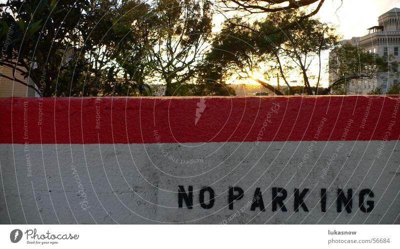 NO PARKING Baum Sonne Farbe Mauer Park Linie verrückt Ast Abenddämmerung Putz Kalifornien Spray negativ Schablone Parkverbot San Francisco