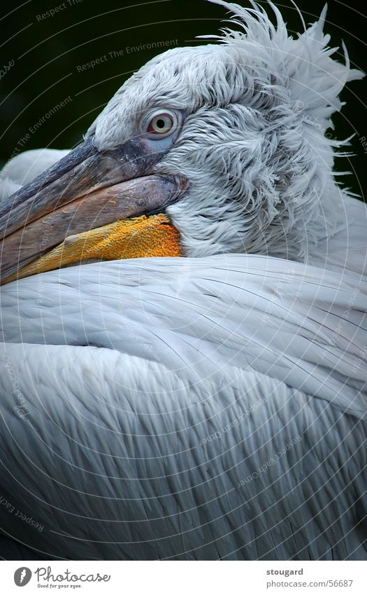 Pelican Florida Zoo animal bird dockside fishing ocean pelican sea seacoast vacation