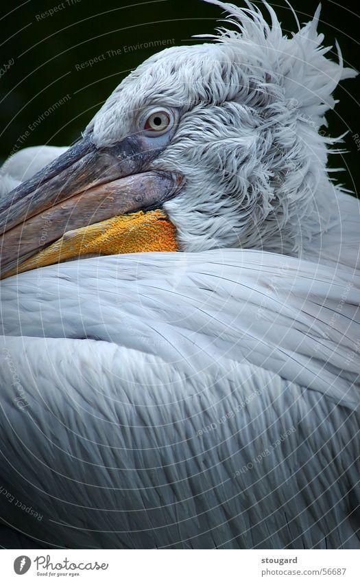 Pelican Zoo Florida