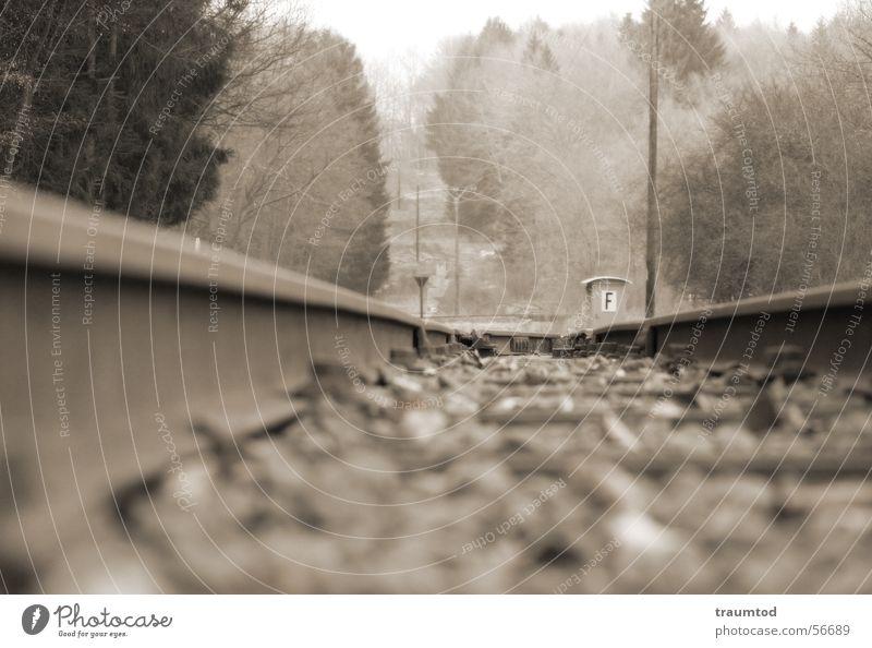 Schienenstrang Wald Stein Eisenbahn Gleise Schnur Tiefenschärfe Straßenbahn Sepia Lokomotive Tonung Wetzlar Aßlar Ehringshausen