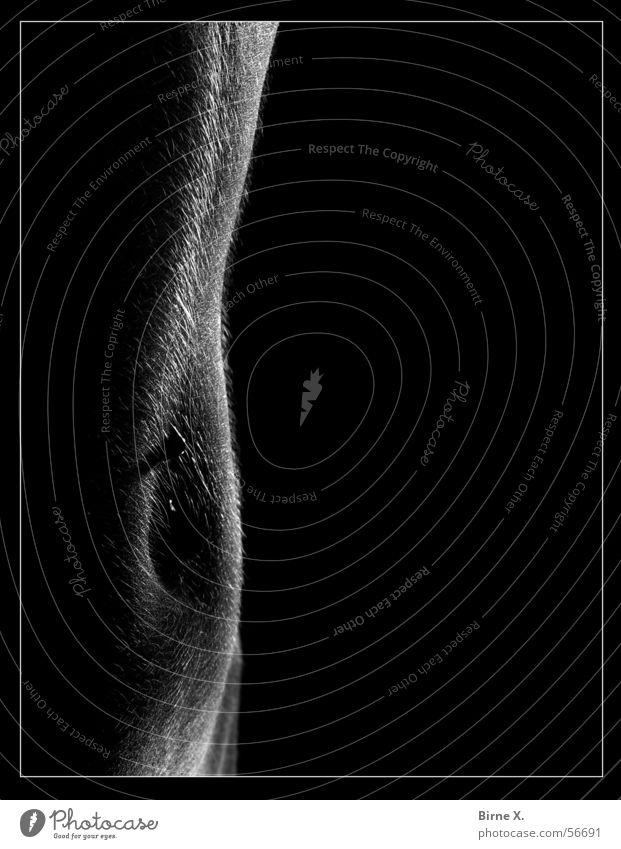 Hairy Belly nackt Frau feminin Bauchnabel Piercing Flaum Härchen Gegenlicht dunkel Akt Bauchnabelpiercing häärchen Silhouette Detailaufnahme Makroaufnahme