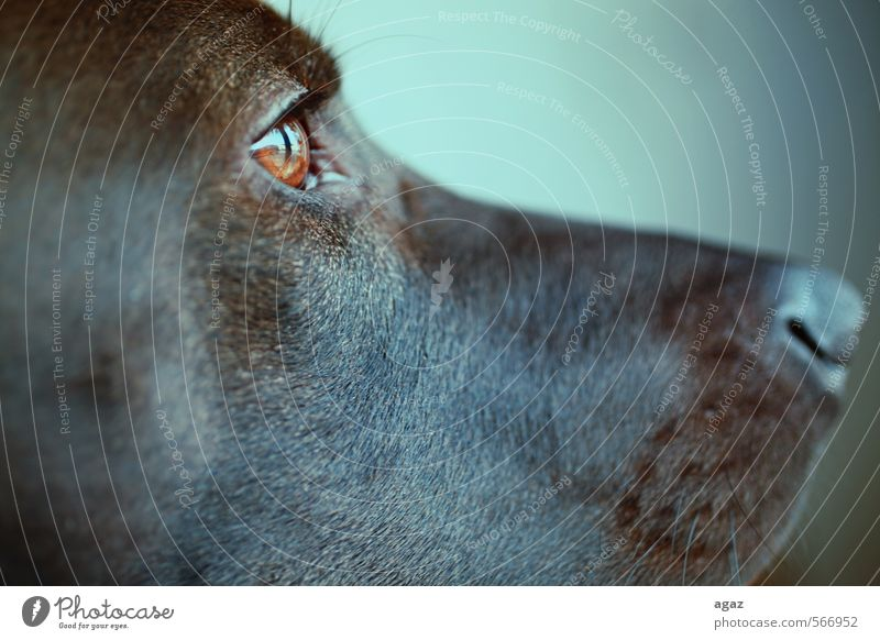 Sharkys Profil Hund ruhig Tier Gefühle braun glänzend Freundlichkeit Sicherheit Schutz gut Fell Vertrauen Wachsamkeit Haustier positiv Geborgenheit
