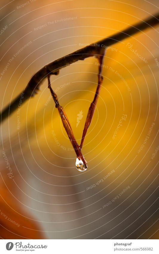 Wasser Tropfen Kind Natur Pflanze schön Sommer Wasser Erotik Blatt Ferne Winter Wald schwarz kalt gelb Traurigkeit Blüte