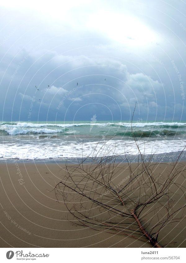 Ein Tag am Strand Wellen Meer Wolken Leidenschaft See Brandung Wellengang Gischt Strandgut Küste Sand Himmel Ast