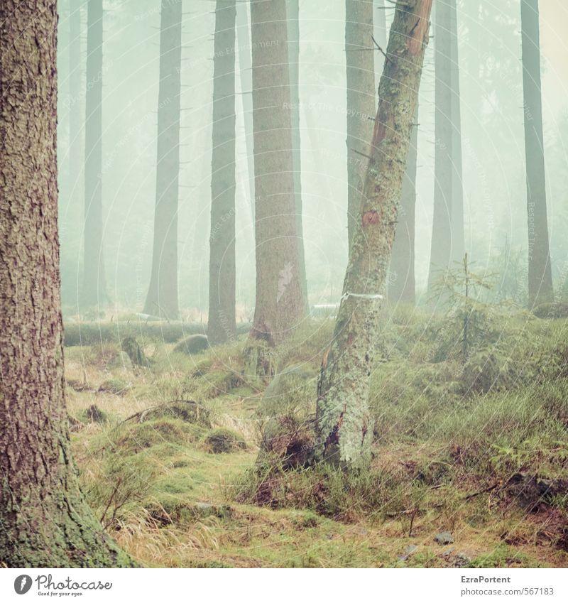 ||||/|| Umwelt Natur Landschaft Pflanze Erde Luft Wasser Herbst Klima Wetter schlechtes Wetter Nebel Baum Gras Moos Wald Holz Linie ästhetisch kalt nass braun