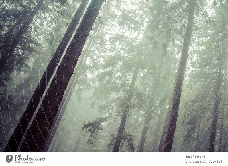 // / Umwelt Natur Landschaft Pflanze Himmel Sonnenlicht Herbst Klima Wetter schlechtes Wetter Nebel Baum Wald Holz dunkel kalt braun grau grün Traurigkeit