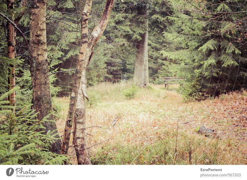 diese Ruhe Umwelt Natur Landschaft Pflanze Herbst Klima Wetter Baum Gras Sträucher Grünpflanze Garten Park Wald Erholung natürlich schön braun grün orange ruhig