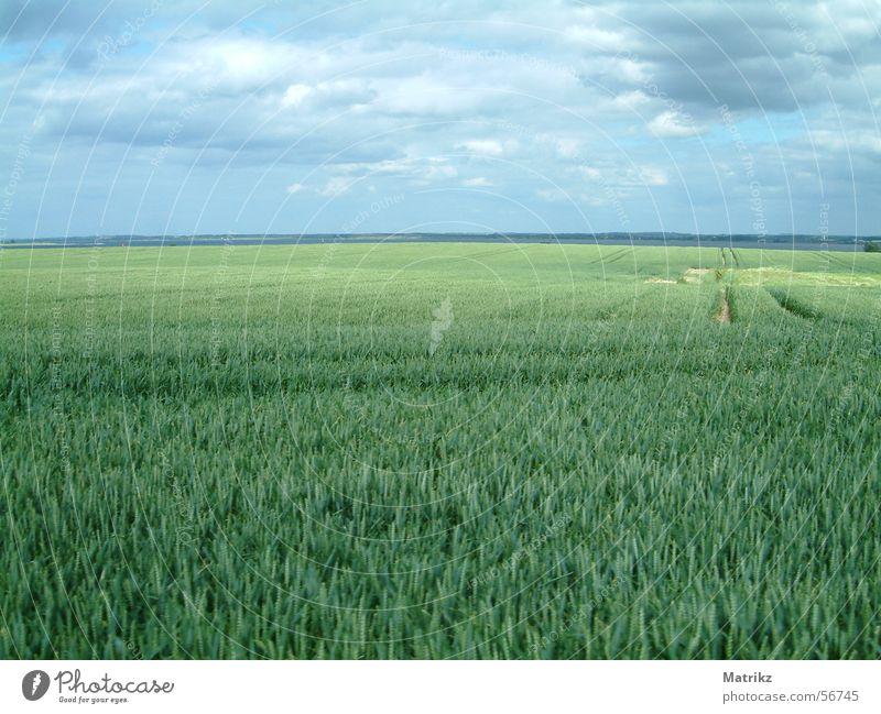 Feld grün unreif Reifenspuren Wolken Sommer Horizont Ferne schlechtes Wetter Erholung Außenaufnahme Himmel Regen blau Freiheit frei field clouds rain horizon