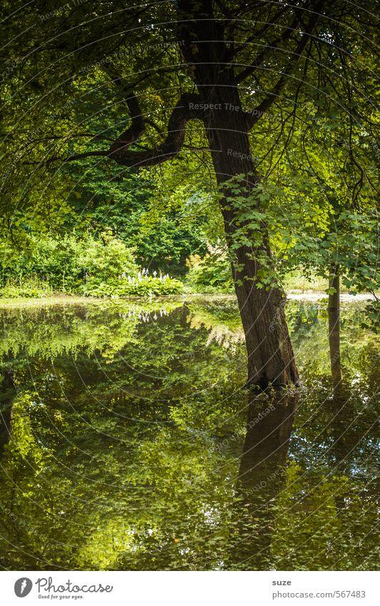 Naturgrün Wasser Pflanze Baum Landschaft Umwelt See Stimmung Park Klima Wachstum Urelemente Wandel & Veränderung Seeufer Baumstamm