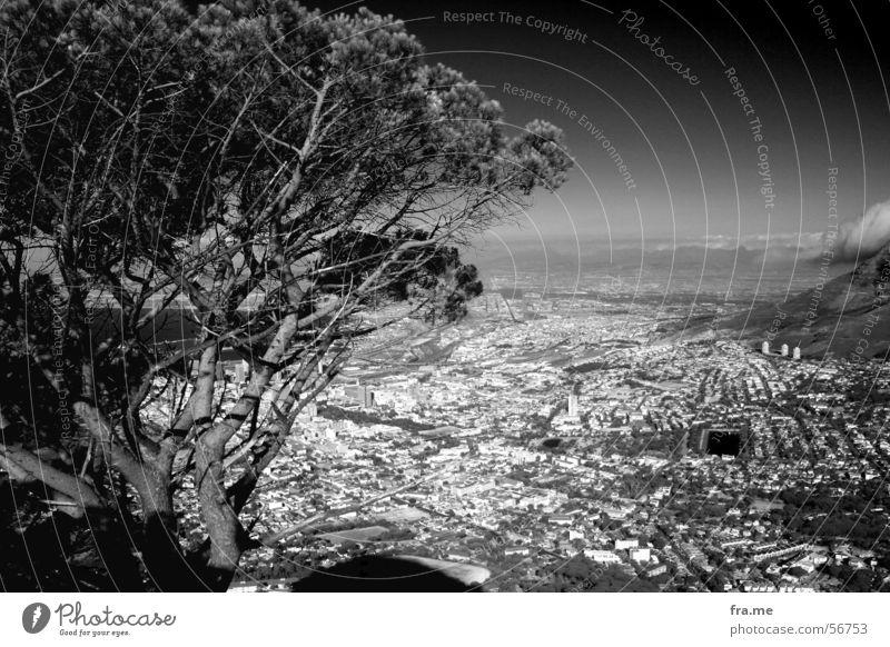 Kapstadt schön Ferien & Urlaub & Reisen Ferne Sommer Sonne Himmel Schönes Wetter Wärme Baum Stadt Stadtzentrum hoch Tafelberg Afrika Südafrika Composing Physik