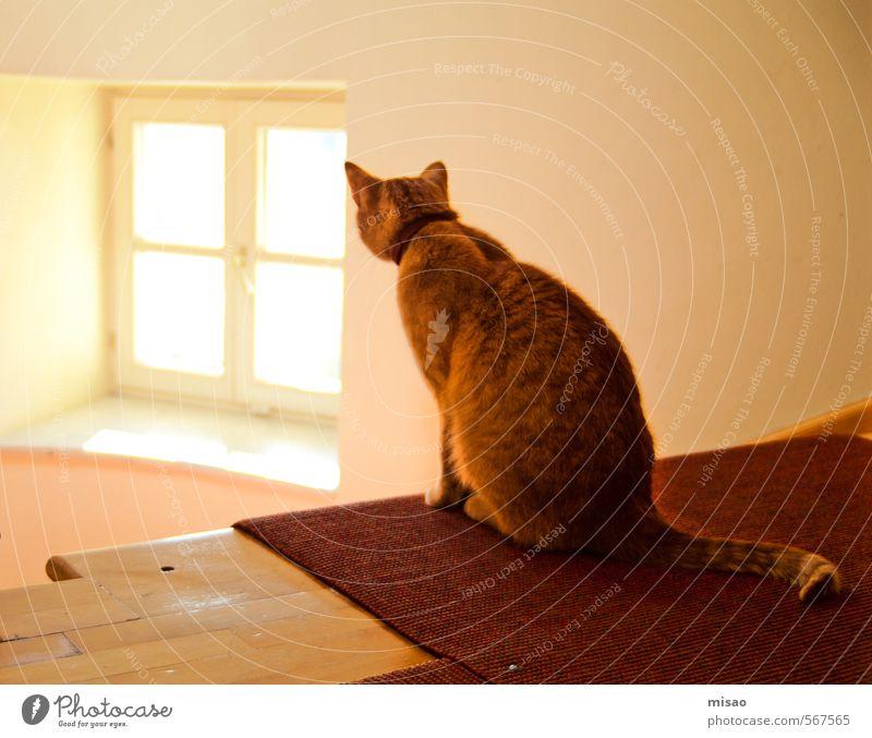 don´t go into the light Katze Ferien & Urlaub & Reisen schön rot ruhig Tier gelb Haare & Frisuren Autofenster Freiheit natürlich orange Treppe gold elegant sitzen