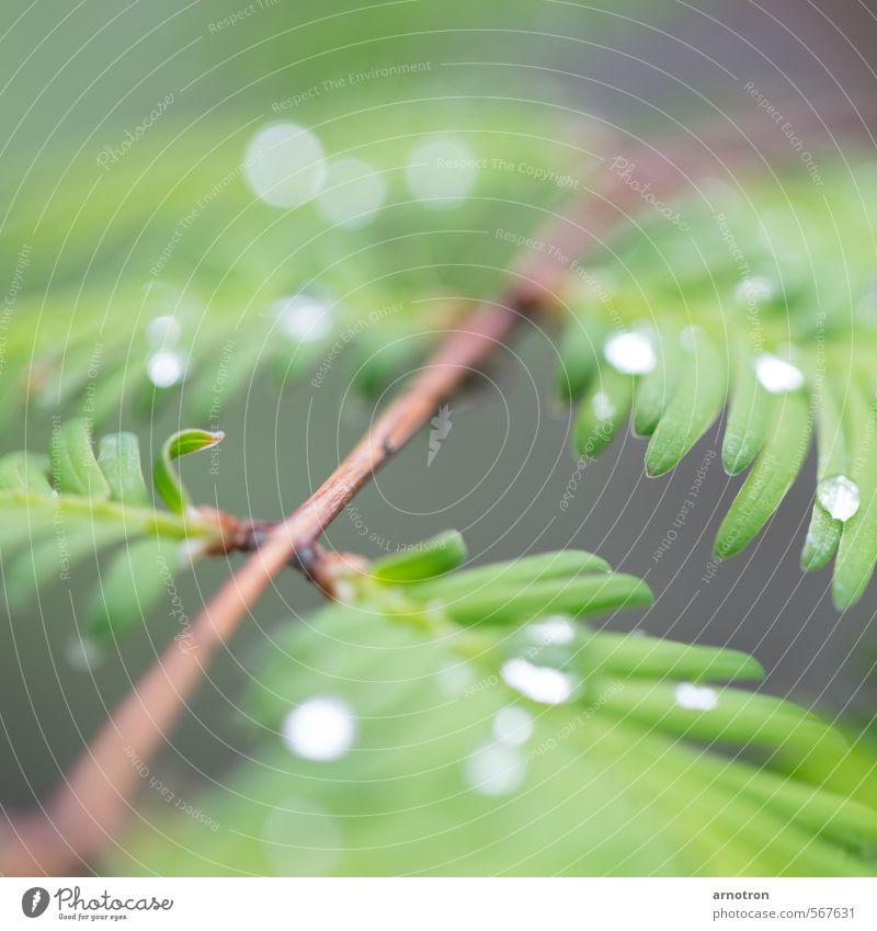 Regenwaldregentropfen - IGS 2013 Natur grün Pflanze ruhig Holz Park Sträucher Wassertropfen Grünpflanze