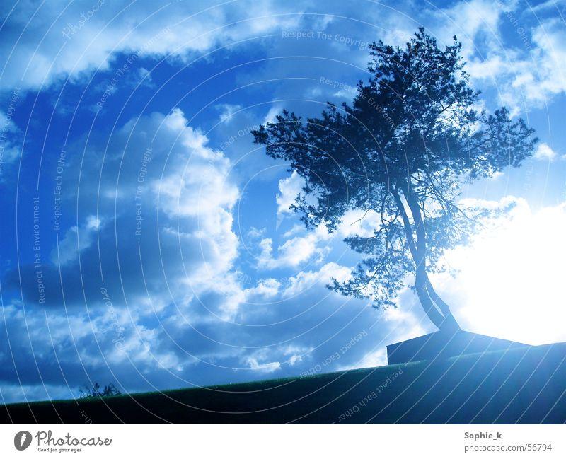 Shining Baum Sommer schwarz Wolken Sonne Himmel blau Landschaft