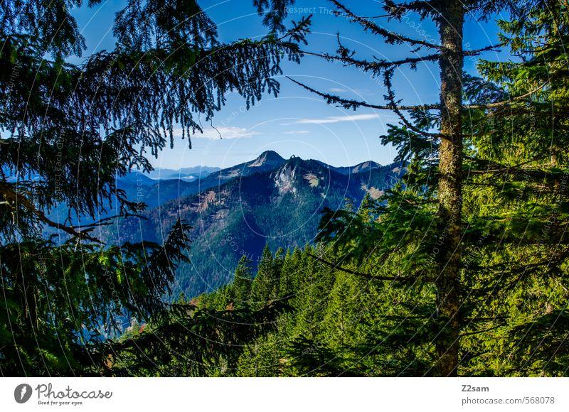 durchblick Himmel Natur Baum Einsamkeit Landschaft ruhig Ferne Wald Umwelt Berge u. Gebirge Herbst Freiheit natürlich Freizeit & Hobby Idylle Sträucher