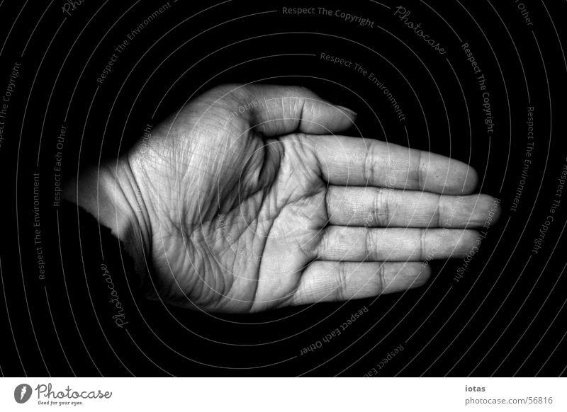 hand Hand Finger schwarz weiß maskulin Mann Fingernagel Nagel Handfläche Senior Kraft Sicherheit Schwarzweißfoto bw b&w black white left fingers digit nail