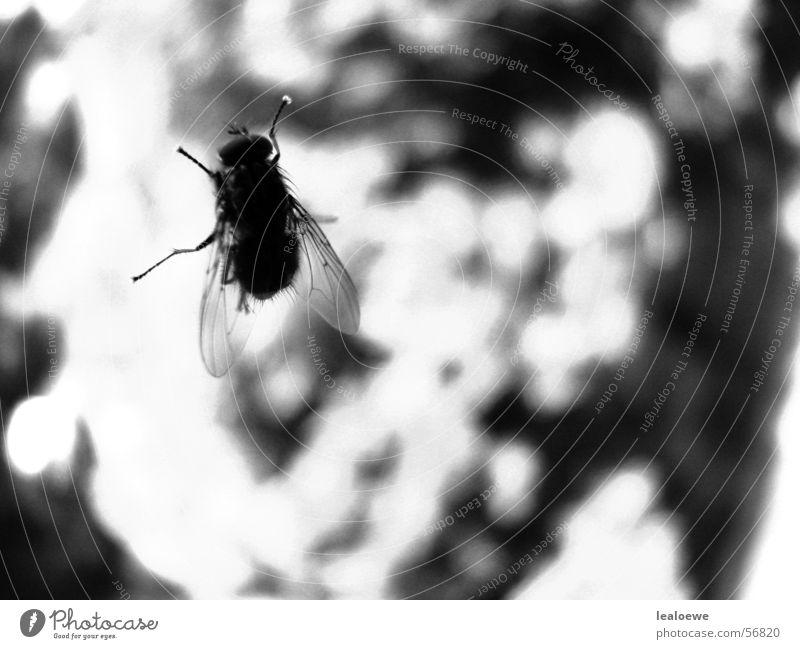 Fliege Fenster nah Insekt Fensterscheibe