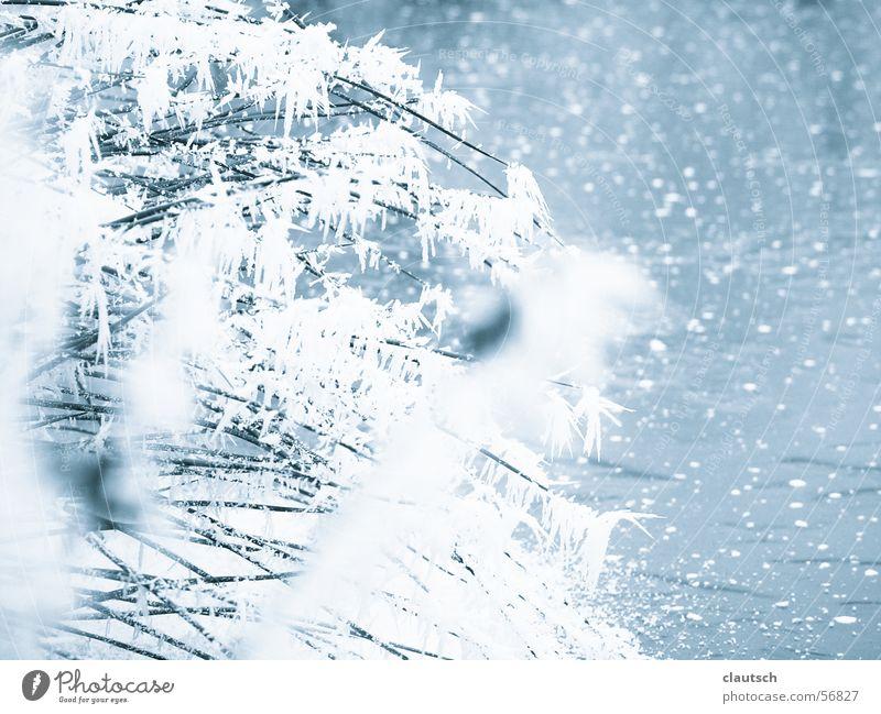 gefrorener teich Natur Wasser blau Winter ruhig kalt Gras See Eis Frost Idylle frieren Halm Teich fein