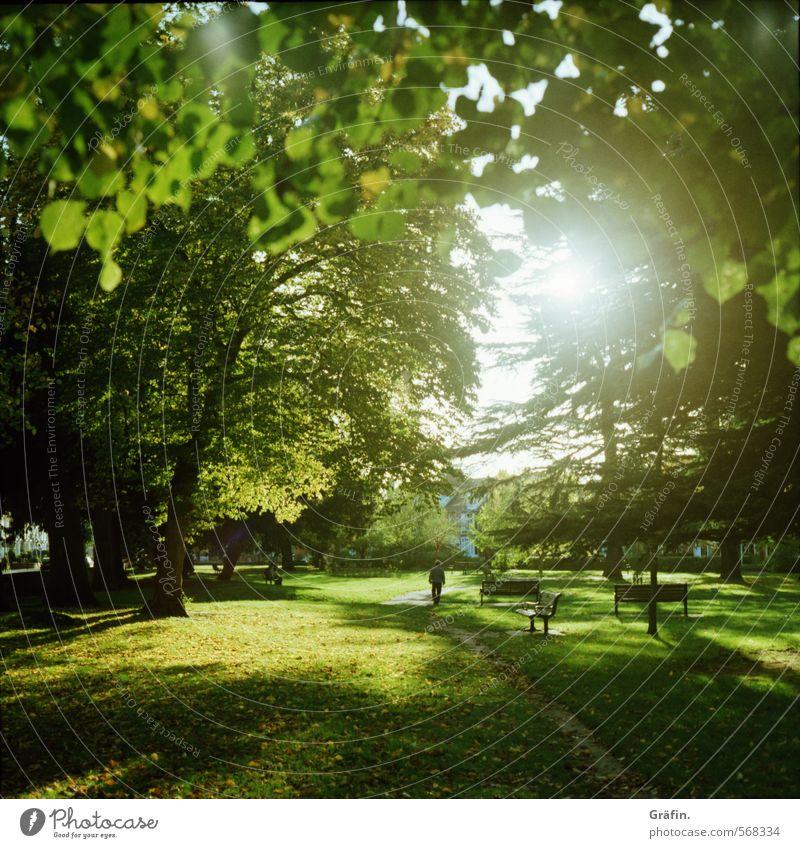 Immer der Sonne nach Erholung Ausflug Sonnenlicht Herbst Baum Park Wiese grün ruhig Zufriedenheit Freizeit & Hobby Idylle Umwelt Spaziergang Farbfoto