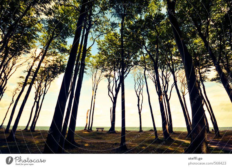 neulich im Geisterwald Baum Einsamkeit ruhig Wald dunkel Küste außergewöhnlich wandern Schönes Wetter Aussicht Romantik Bank Sehnsucht gruselig Baumstamm