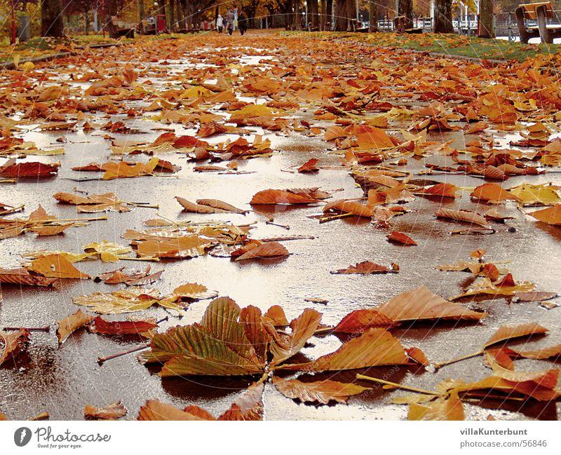 Blätterweg Baum Blatt Straße Herbst Wege & Pfade mehrere liegen Unendlichkeit viele Kastanienbaum herbstlich